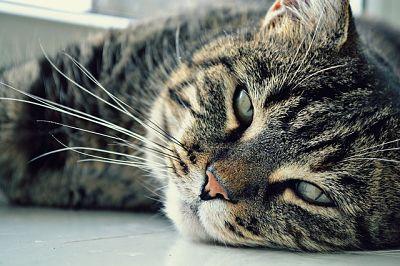 nombres-para-gatos