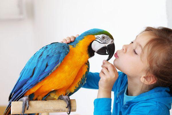 El-mejor-nombre-para-un-pájaro
