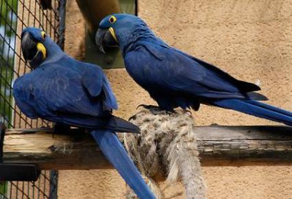 Nombres-para-pájaros