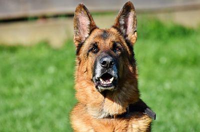 Nombres de perros famosos_opt