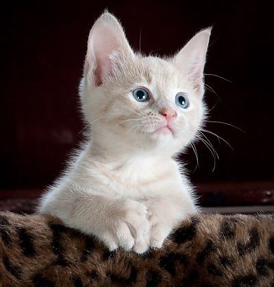 Nombres para gatitas_opt